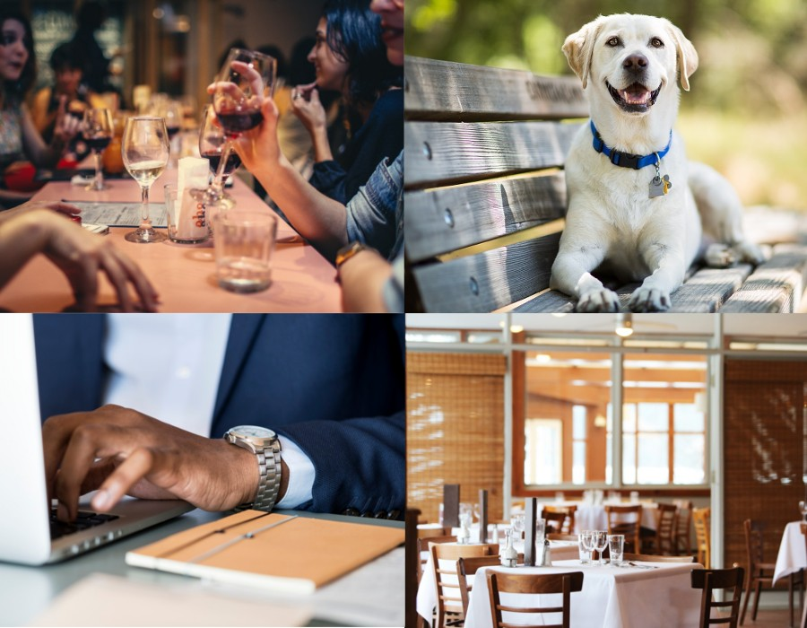 Licenses for Restaurant, Pets, Business