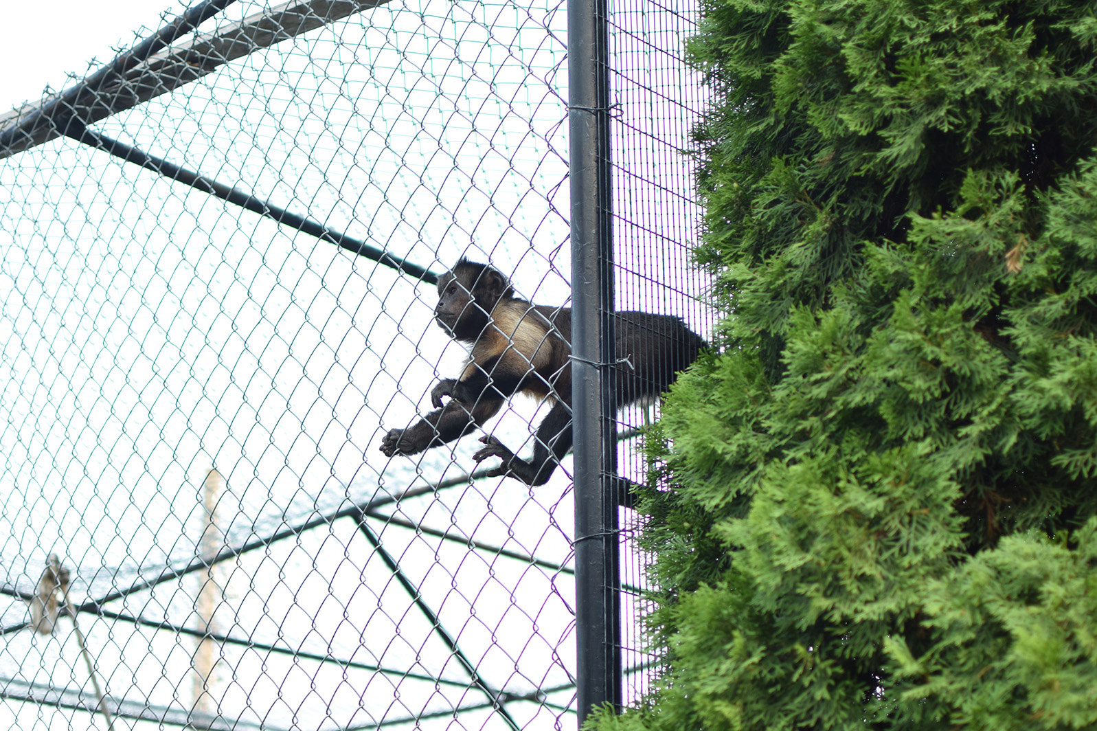 Willow Park Zootah Monkey